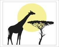 Giraffe in Savannah in the sun. Giraffe black silhouette against the yellow of the sun in Savannah.  Safari gravure black silhouette Stock Images