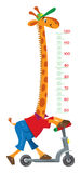 Giraffe on scooter. Meter wall or height chart Stock Image