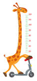 Giraffe on scooter. Meter wall or height chart Royalty Free Stock Images