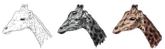 Giraffe. Royalty Free Stock Images