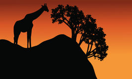 Giraffe silhouette in cliff scenery. At the afternoon Royalty Free Stock Images