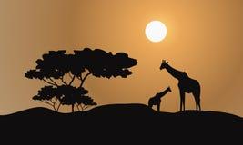 Giraffe silhouette in hills Stock Images
