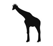 Giraffe silhouette illustrated. On a white background Stock Photos