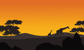 Giraffe silhouette in park scenery. At the afternoon Royalty Free Stock Photography