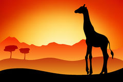 Giraffe silhouette savanna landscape nature sunset sunrise illustration Stock Photos