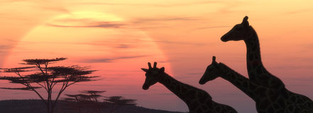 The giraffe silhouette. Giraffe silhouette at sunset. This is a 3d render illustration Royalty Free Stock Images