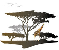 Giraffe with silhouette of tree. Color giraffe on savannah with silhouette of africa trees, illustration isolated on white Royalty Free Stock Photos