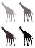 Giraffe silhouette Royalty Free Stock Photo