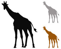 Giraffe silhouette Royalty Free Stock Photos