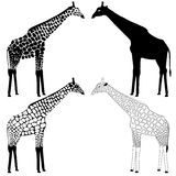 Giraffe silhouettes collection Stock Images