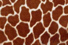 Giraffe skin. Stock Images