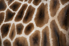 Giraffe skin Stock Photo