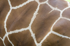 Giraffe skin background Stock Photo