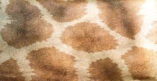 Giraffe skin background Stock Images