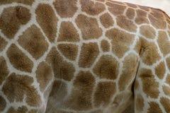 giraffe skin for background