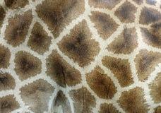 Giraffe skin Stock Photography