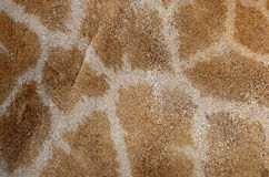 Giraffe skin Royalty Free Stock Images