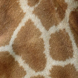 Giraffe skin Stock Photos