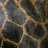 Giraffe skin Royalty Free Stock Photo