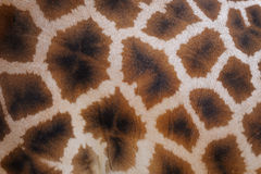 Giraffe skin with pattern Royalty Free Stock Image