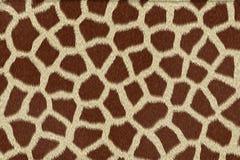 Giraffe skin texture. Brown and white texture at giraffe body Vector Illustration