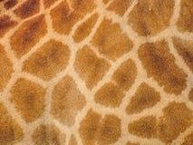 Giraffe skin Royalty Free Stock Images