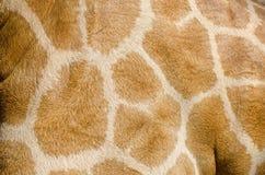 Giraffe skin texture Royalty Free Stock Photos