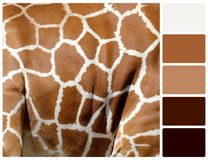 Giraffe skin texture with palette color swatches Stock Photography