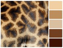Giraffe skin texture with palette color swatches Stock Photo