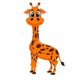 Giraffe with a smile Stock Photo