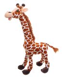 Giraffe soft toy. Isolated on white royalty free stock images