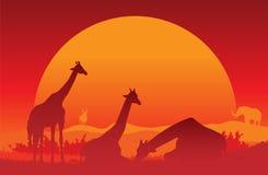 Giraffe-Sonnenuntergang Lizenzfreie Stockfotografie