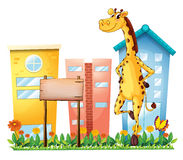 A giraffe standing beside an empty wooden signboard Stock Image