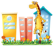 A giraffe standing in front of the tall buildings Royalty Free Stock Photo