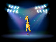 A giraffe standing in the middle of the stage Royalty Free Stock Images