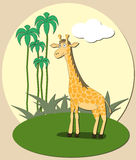 Giraffe. With sun tropical background Stock Photography