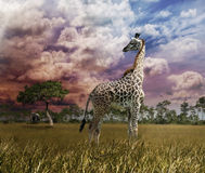 Giraffe At Sunset Stock Images