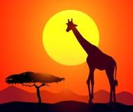 Giraffe & Sunset-vector Stock Images