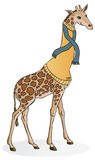 Giraffe in a Sweater. A giraffe in a turtleneck sweater and scarf Royalty Free Stock Photos