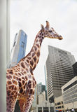 Giraffe in a town Royalty Free Stock Image