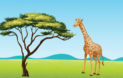 Giraffe by a tree. Illustration of African scene with giraffe Royalty Free Stock Images