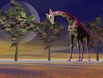Giraffe and trees and moon Royalty Free Stock Photo