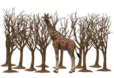 A giraffe trying to graze amid some tall bare dried trees. A computer generated illustration image of a giraffe trying to graze amid some tall bare dried trees vector illustration