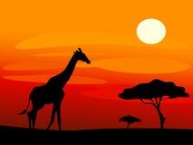 Giraffe und Bäume während des Sonnenuntergangs stockfotografie