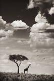 Giraffe und Baum Stockfotografie