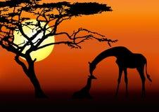 Giraffe- und Schätzchenschattenbild lizenzfreie stockbilder