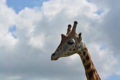 Giraffe und Wolken Stockfotos