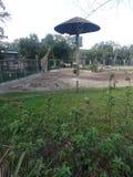 Giraffe und Zebras Lizenzfreies Stockbild