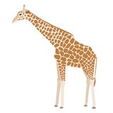 Giraffe vector. Brown cartoon giraffe isolated on white Stock Images