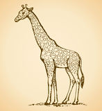 Giraffe. Vector drawing Stock Photography